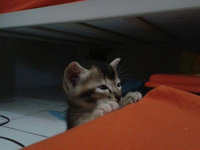 #cat #hide #hiding #hideandseek