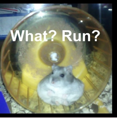 Fat Hamster Is So Cute Fat Hamsters Pinterest