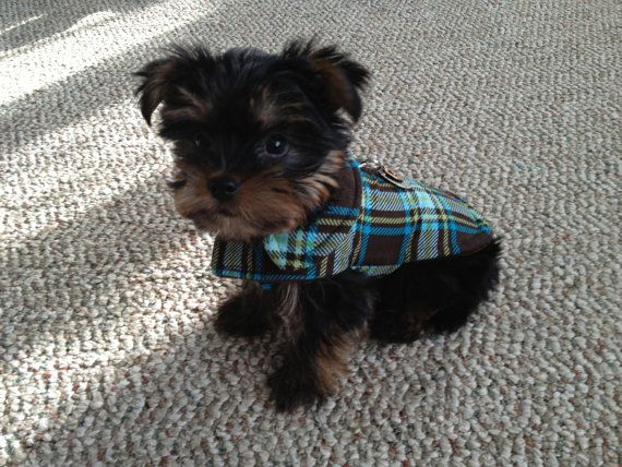 Brown and Turquoise Plaid Corduroy Dog Jacket  Size by KozyCanines