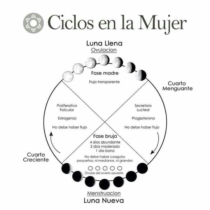 Ciclo menstrual fase lunar alquimia femenina Cuando hay luna creciente