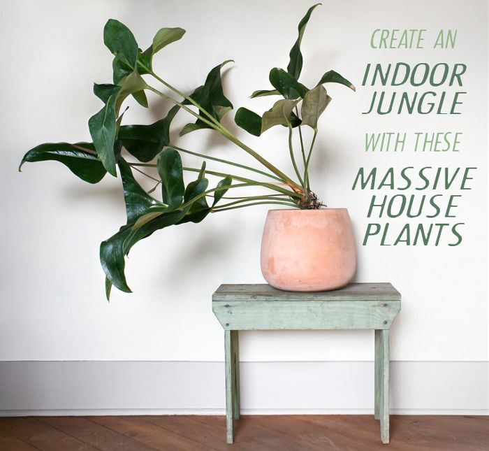 The 25 best large indoor plants ideas on pinterest plants indoor indoor green plants and - Best big indoor plants ...