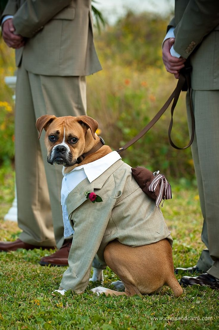 It would be so cute to have your dog as the ring bearer!! notice the ring bearer pillow <3