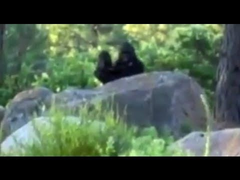 Clear Video of Bigfoot Filmed During Independence Day? I love the mom carrying her baby, seems so real, yet unreal too!