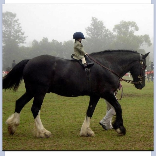 Omg that's a big horse for a little girl