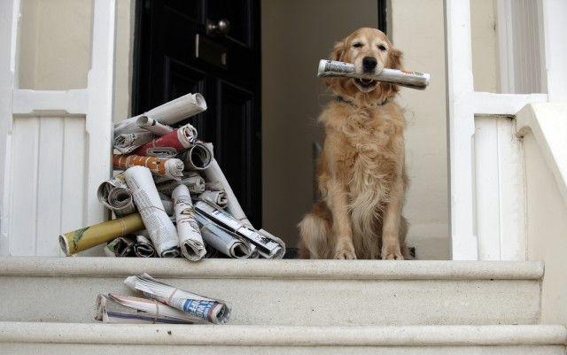 Come riciclare i vecchi quotidiani: ecco tante idee originali