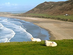 The locals relaxing and enjoying the view at Rhossili