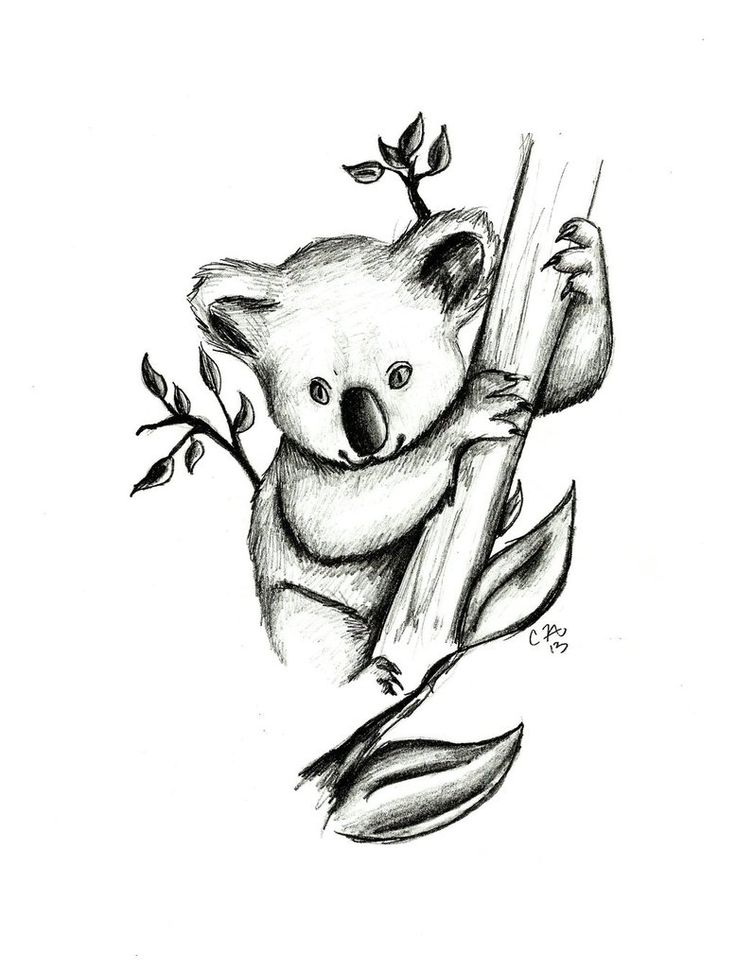koala drawing pictures - Google Search