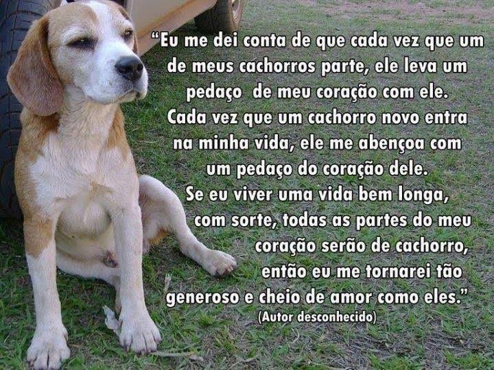 Eu me dei conta que cada vez que um de meus cachorros parte, ele leva um pedaço de meu coração com ele... #salve #proteja #caes http://www.timevencedor.com