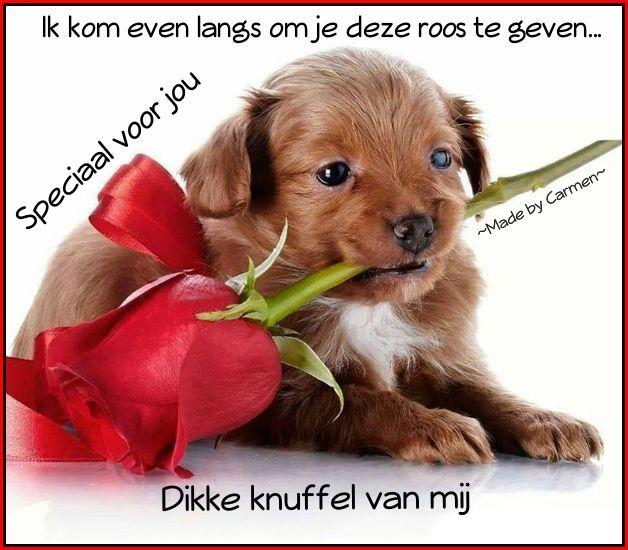 Good Morning My Sweet In German : Best images about gefeliciteerd etc on pinterest