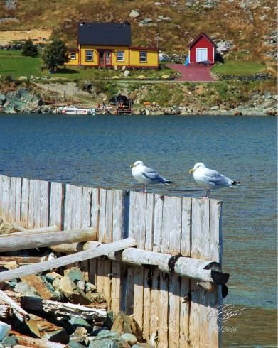 Home To Roost - Cupids, Conception Bay, Newfoundland Photography by Stone Island Photography