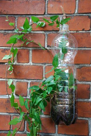 waterbottle as greenhouse