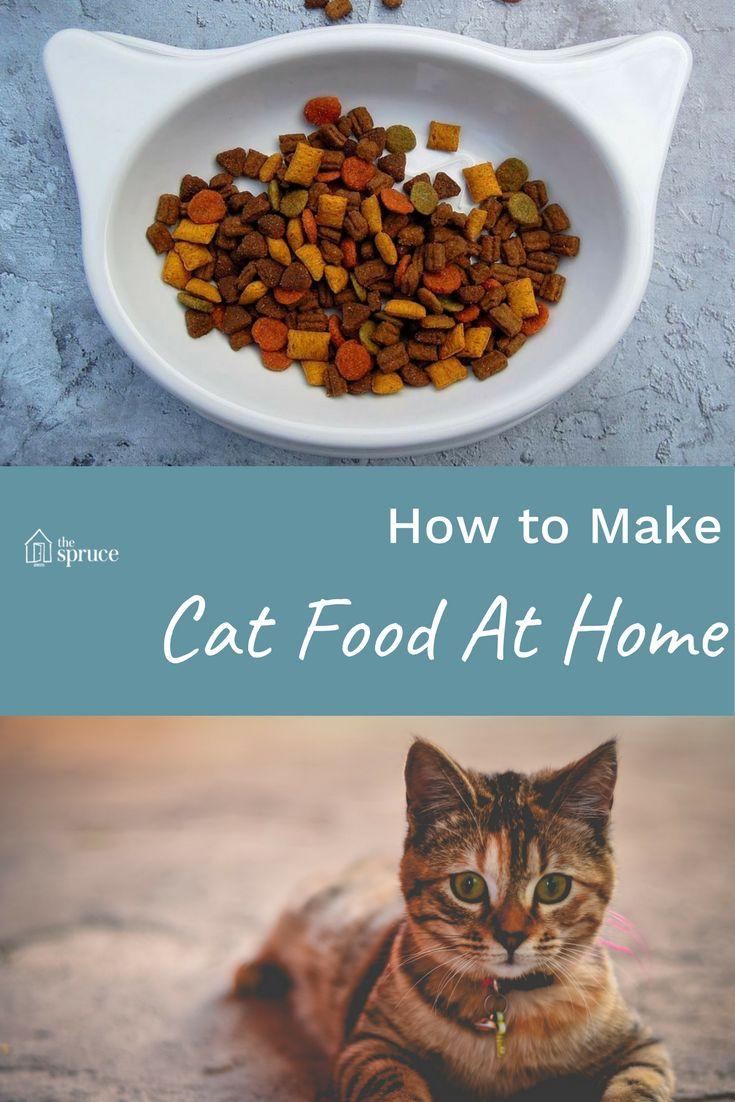 Save money and keep your pets healthy -- these recipes to make cat food at home are easy to make, and your kitty will love them!