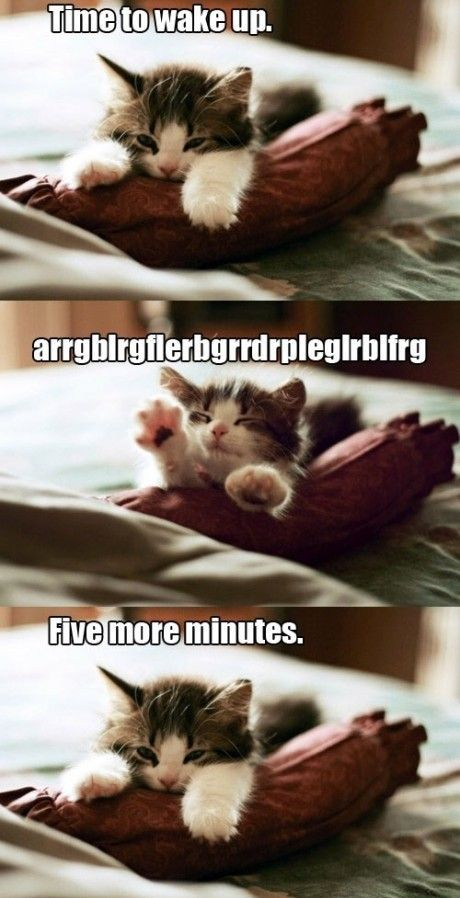 Laziest kitten in the world. <3 haha this is so me when shane tries to get me up