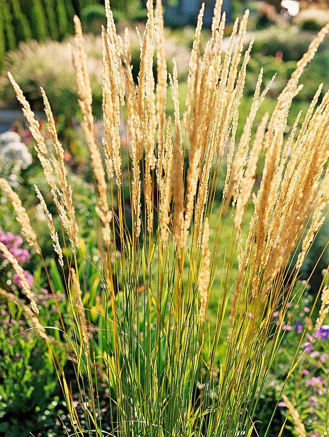 23 Varieties of Ornamental Grasses We're Obsessed With