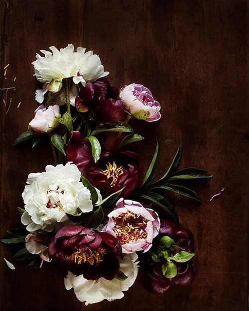 I am in love with peonies these days. love the dark rich purples here. from design sponge (http://www.designsponge.com)