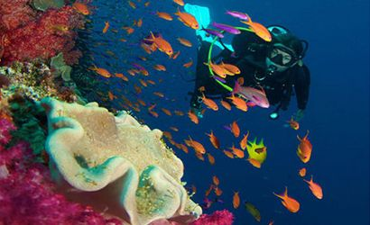 Fiji Holiday Packages | Fiji Tour packages
