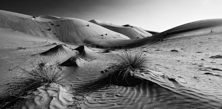 Martian Landscapes In Wahiba Sands - The Wahiba Sand dunes sculpted by winds into delicate moulded crests and fascinating hollows. Some tunes tower at 100 meters in places.