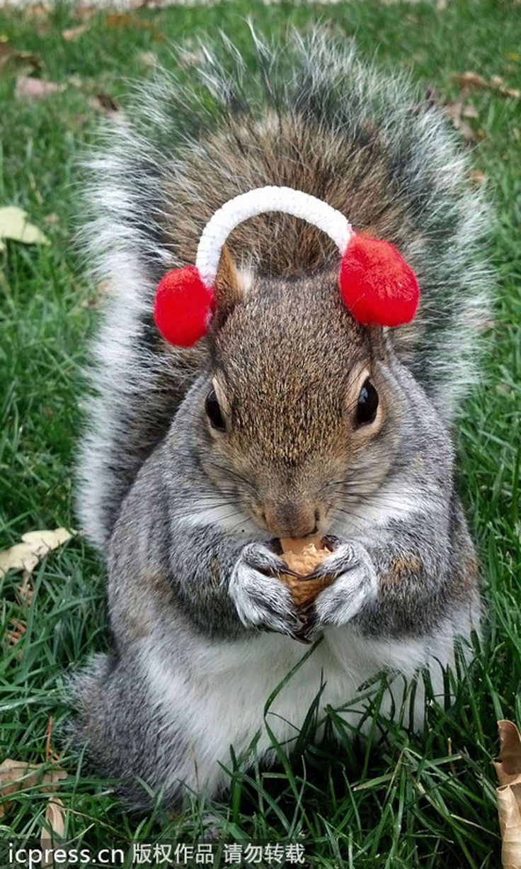 19 best Squirrel Coasters images on Pinterest