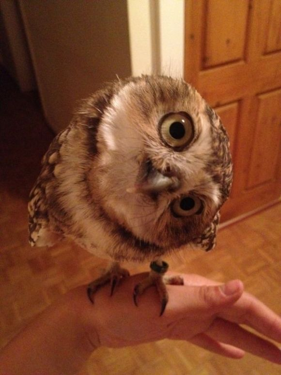 Another Photo Of The Most Adorable Owl In The World!