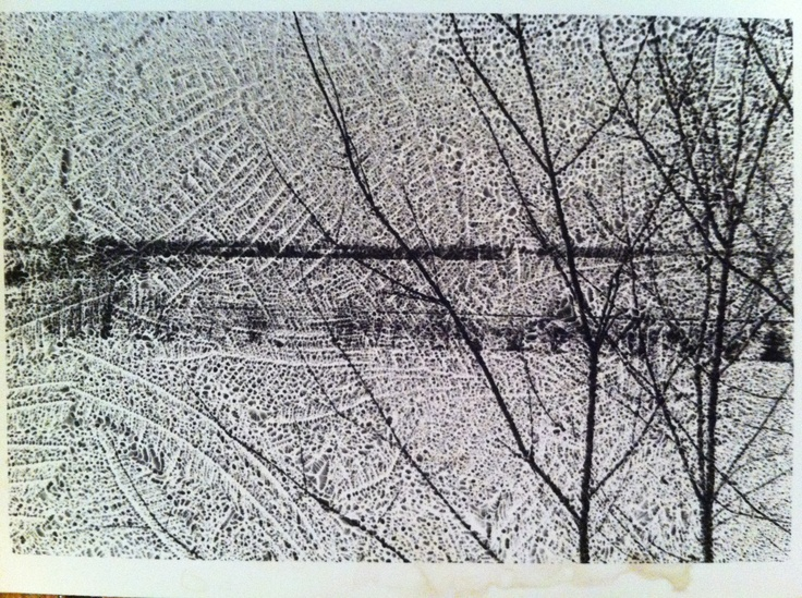 Reticulation shot of tree and field.