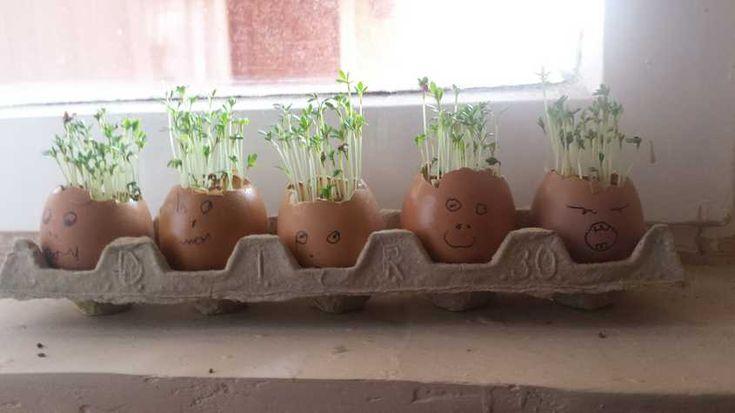Húsvéti fűfejek - Lurkovarázs.hu - Kreatív feladatok gyerekeknek