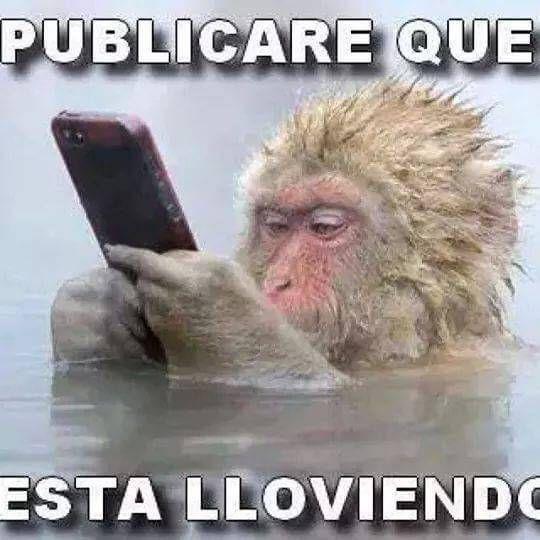 Memes muy chistosos con monos (1)