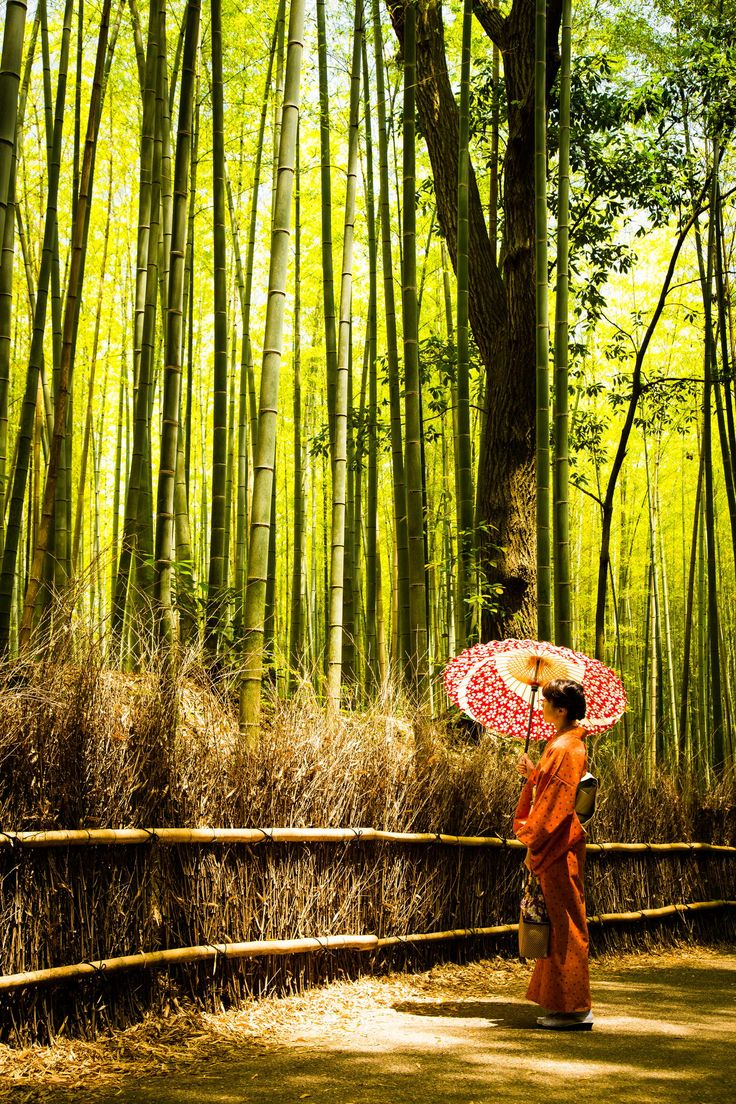 Bamboo Forest - Kyoto, Japan