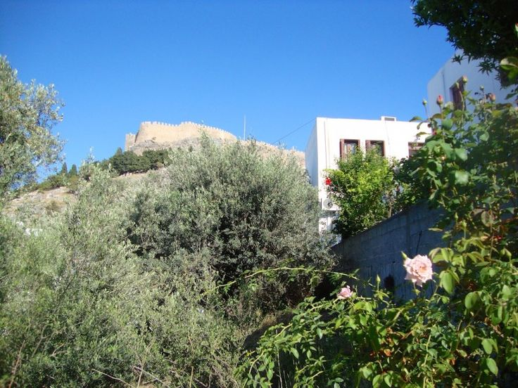Looking up from my land toward the acropolis