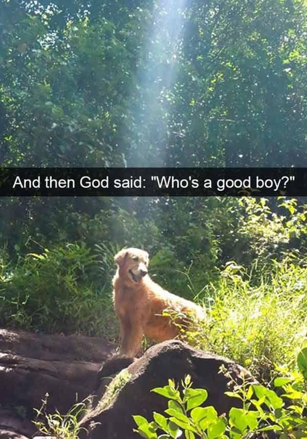 God & Dogs ~ funny snapchat humor