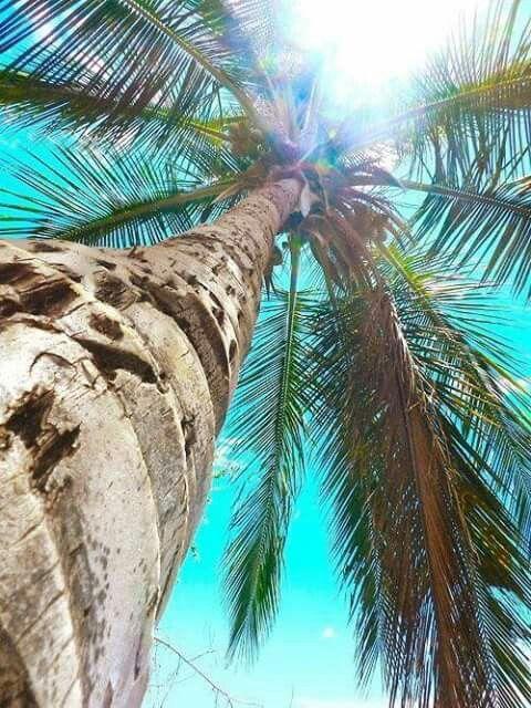 Love palm trees ❤️