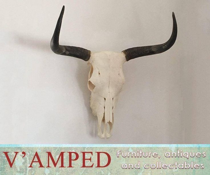 Add this gorgeous piece of natural art – the Nguni skull to your collection. Available from #VampedFurniture. Visit us in-store or contact Rory on 076 983 4008 for more information. Delivery available nationwide on arrangement.