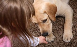 What types of Psychiatric Conditions can a psychiatric service dog help with?