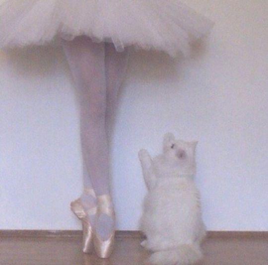 31 best cat aesthetic images on pinterest cute kittens