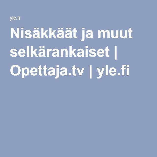 Nisäkkäät ja muut selkärankaiset   Opettaja.tv  yle.fi
