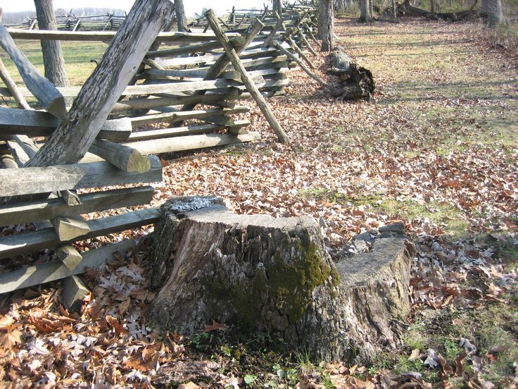 Confederate Major General Henry Heth was wounded by the tree to which this stump belongs[...]