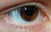 Eye Need To Know: Humans have a blind spot. Your brain fills in the gap with information from your other eye!