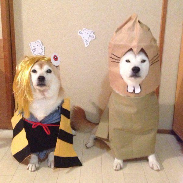 柴犬の妖怪写真が可愛すぎるwwwwwwwwwwwwww:ハムスター速報