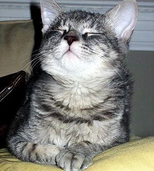 So you brought home a new kitten and now you need a name to fit his or her spunky personality. If your cat tends to show off a brave and daring side in favor of a cute and cuddly one, maybe a warrior name is in his future! Choose one of these 50 warrior cat names for your fearless feline.