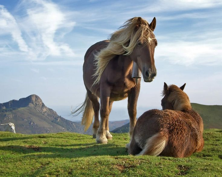 Nuevo post en mi #blog Victor Madera, sobre la historia del #caballo.  http://victormadera.blogspot.es/1467193036/victor-madera-historia-del-caballo/