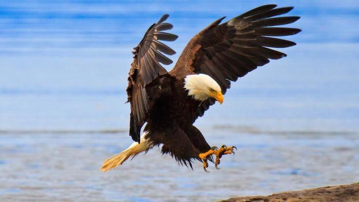10. Eagle
