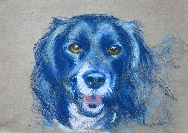 Ozzie, Oil pastel on paper - A3 size. Border Collie. Dog portrait