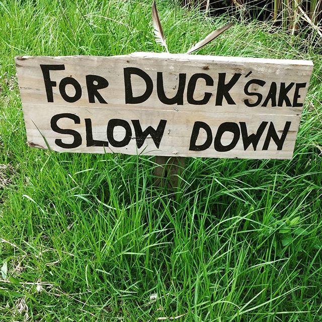 It's a sign. For Duck sake slow down #slowdownyou'rehere #waihekeisland #loveducks #sign