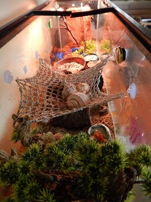 Check out all the climbing space, netting, and extra shells in this tank.