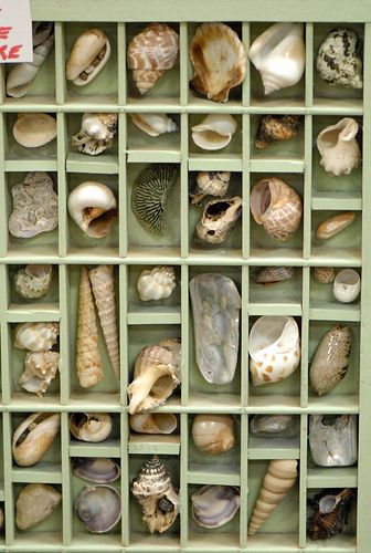 cool shadow box idea to do with the kids after we visit the coast.