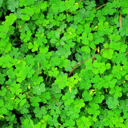 History of St. Patricks' Day | St patricks day | Spoonful