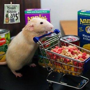 La rata Marty
