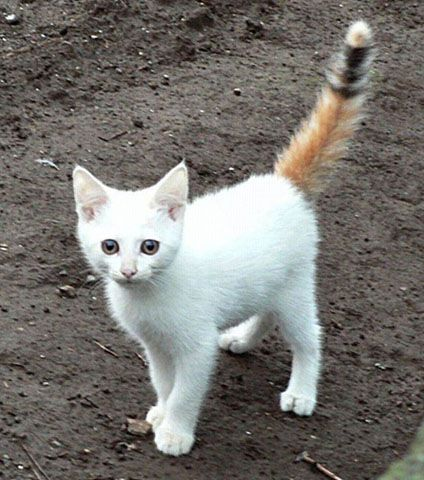 special kitten *OMG,have you SEEN my tail?XD!!!*