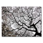 Found it at Wayfair - 'Japanese Maple Spring Abstract II' by Kurt Shaffer Photographic Print on Wrapped Canvas