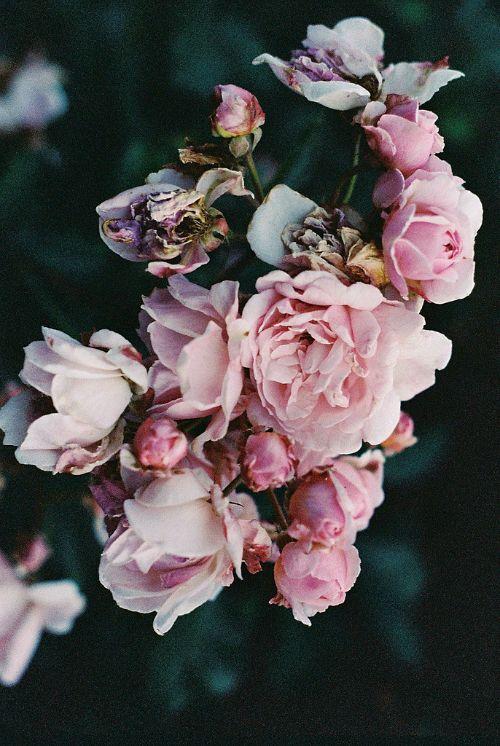 ● flores
