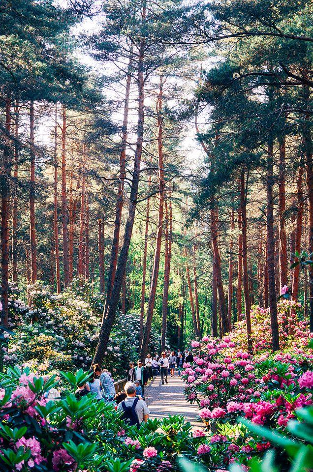 Rhododendron Park In Full Blossom, Etelä-Haaga, Helsinki | (c) Jussi Hellsten, jussihellsten.com & visithelsinki.fi Re-pinned for you by #Europass